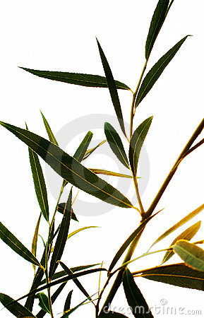 Free Willow At Dusk Royalty Free Stock Photography - 18897