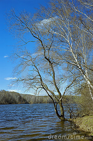 Free Willow At The River In Early Spring, Russia Stock Photo - 19224890