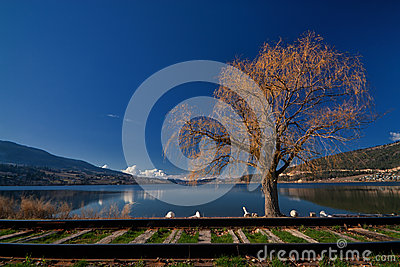 Willow Tree on the Lake