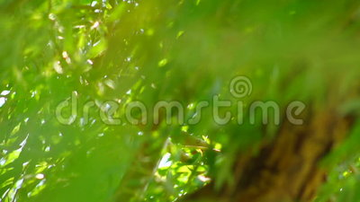 Willow Tree Moving In The Wind Wildly stock footage