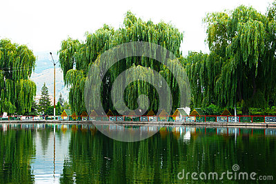 Willow trees at the lake