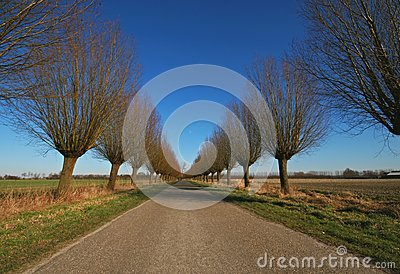 Willowroad