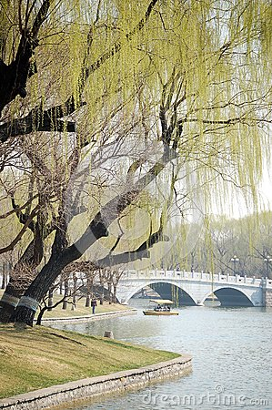 Willows beside bridge