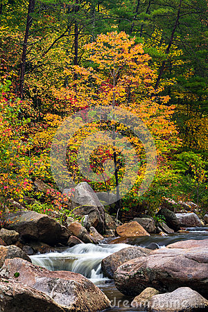 Free Wilson Creek Autumn 11 Royalty Free Stock Photography - 45892017