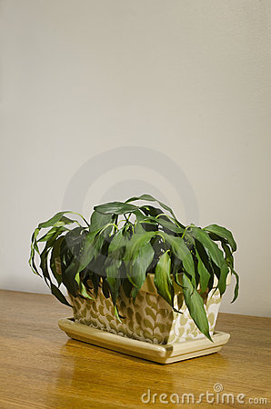 Wilted house plant_2