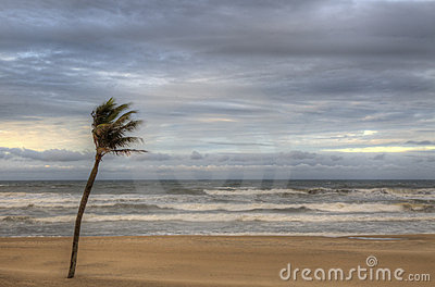 Wind blowing against palm tree in HDR