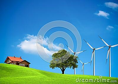 Wind ecology