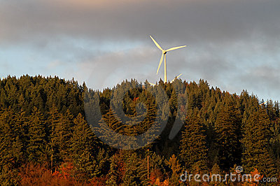 Wind energy mills over forest