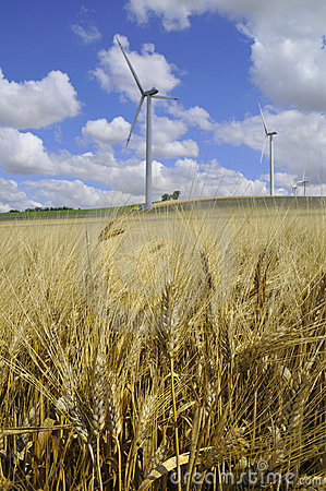 Wind farm and barley