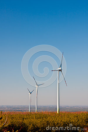 Wind Farm Turbines, Ecology