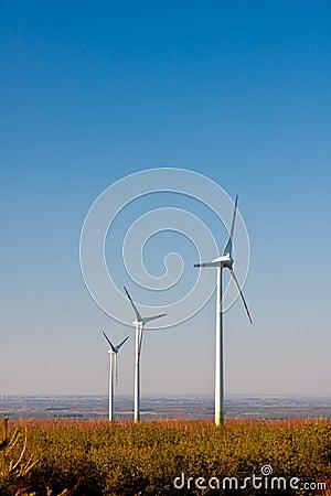Wind Farm Turbines, Ecology