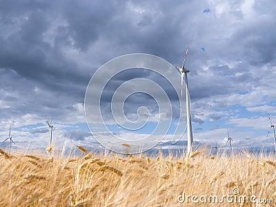 Wind generators in landscape