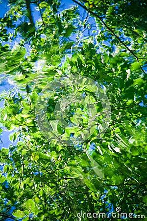 Wind in green leaves
