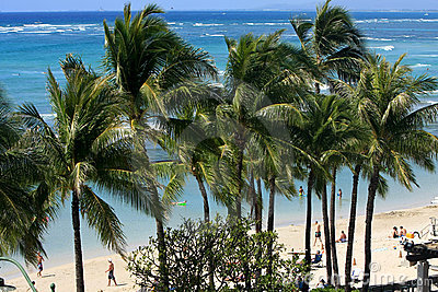 Wind in the palm tress at Waikiki. Editorial Photo