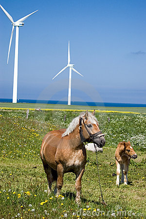 Wind power horses.