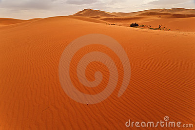 Wind rippled sand dune and oasis Sahara Morocco