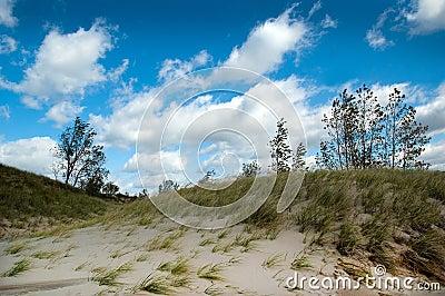 Wind swept  michigan dunes