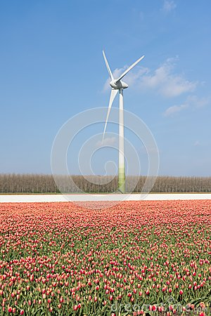 Wind turbine behind a field of red tulips