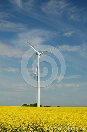 Wind turbine on field of oilseed rape