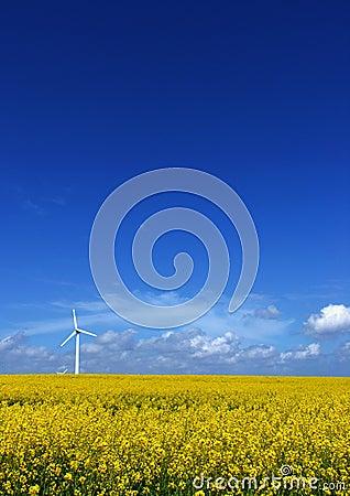 Free Wind Turbine On Rape Field Stock Photo - 135900