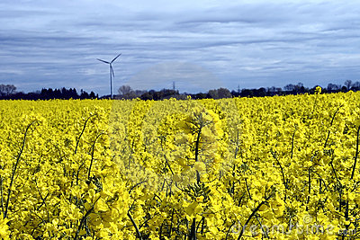 Wind turbine, yellow field.