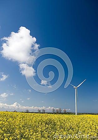 Wind turbine, yellow field.