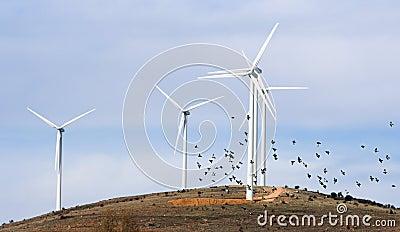 wind turbines and birds