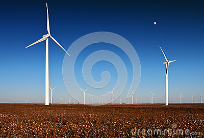 Wind turbines in a Cotton Field