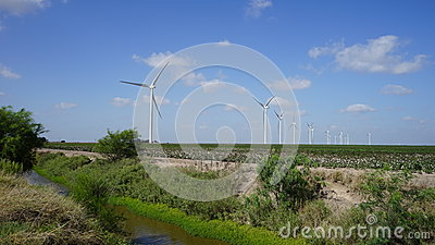 Wind turbines in cotton field