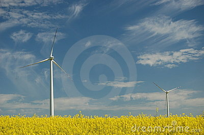 Wind turbines on field of oilseed rape