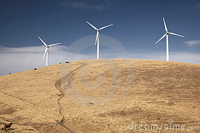 Wind Turbines on a Hill With Cows