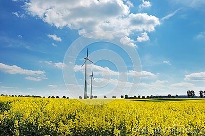 Wind turbines among rapeseed fields and mead