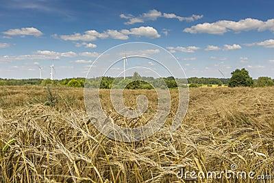 Wind turbines in Suwalki Landscape Park, Poland.