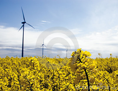 Wind turbines, yellow field.