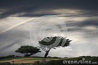Windblown Baum
