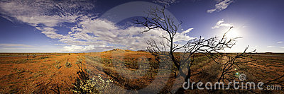 Windblown tree panorama