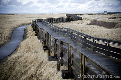 Winding boardwalk through tall grass