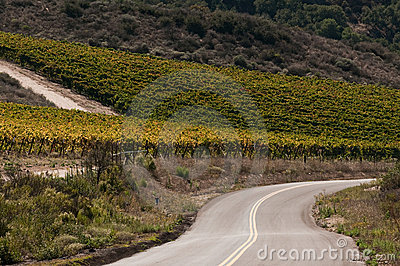 Winding Countty Road By Vineyard