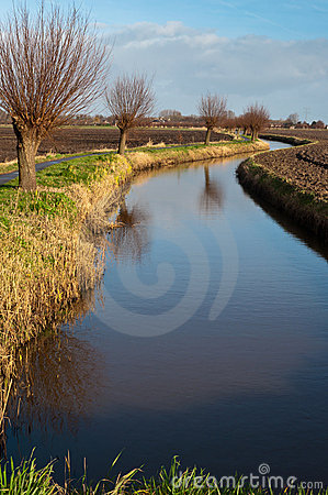 Polder landscape in the Netherlands with a curved ditch and pollard