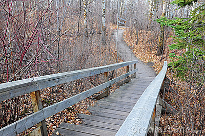 Winding hiking trail in forest