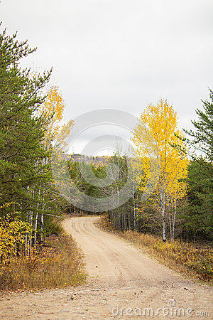 Winding road between spruce trees
