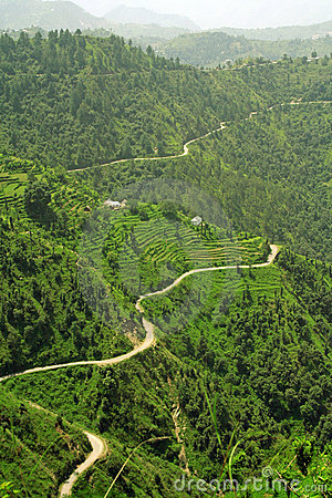 Winding roads  thorugh rice step farms of the hima
