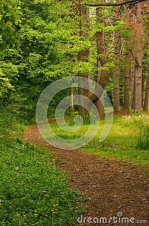 Free Winding Trail Royalty Free Stock Photo - 137825