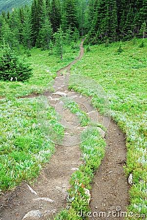 Winding trail on alpine meadow