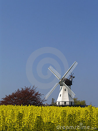 Windmill behind rape