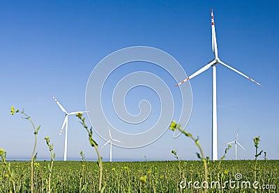 Windmill farm in green field