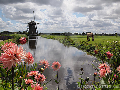 Windmill and flower landscape in Holland