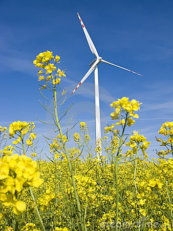 Free Windmill In Yellow Field Royalty Free Stock Photos - 5165528