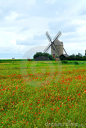 Windmill and poppy field