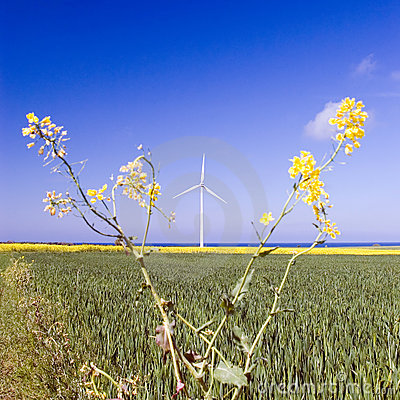 Windmill and rape plant